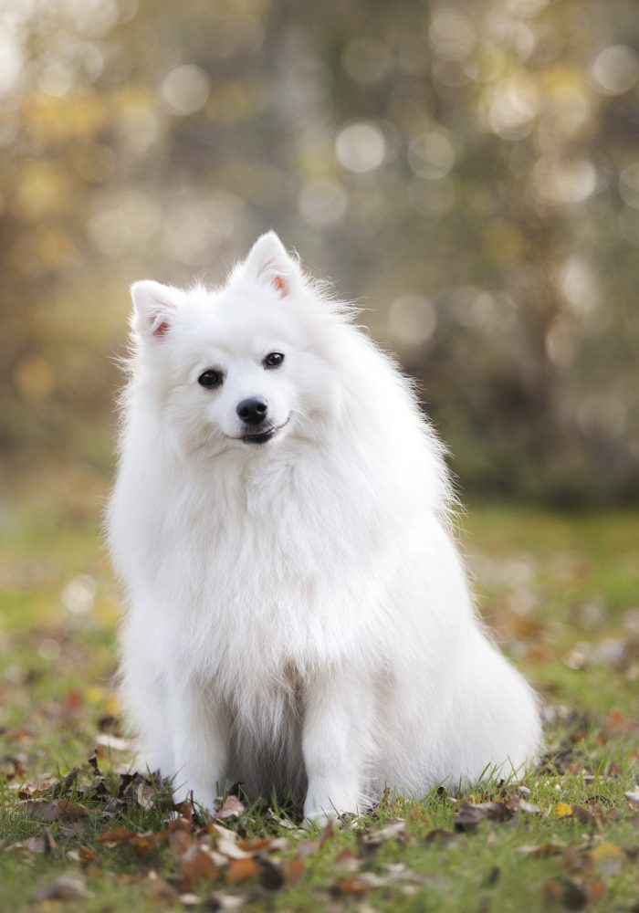 dog-g8ed538473_1920